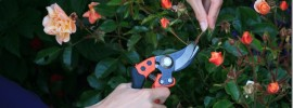 Bahco-Ergo-Pruner-Review.jpg