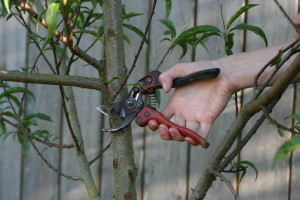 Bahco Ergo PX-M2 Pruner: Great for Lefties, Too